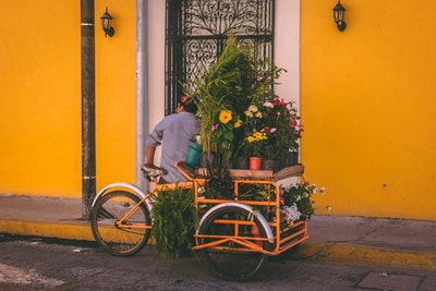 A man selling flowers from a bicycle provides a simplified representation of the 2PL model.